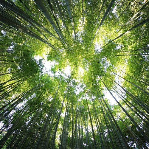 France Relance : 97 lauréats pour l'appel à projets amont de la filière bois-forêt